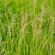 Abstract fresh grass background, shallow depth of field — Stock Photo