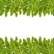 Green leaves frame isolated on white background — Stock Photo #33328739