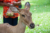 Antelope in dierentuin — Stockfoto