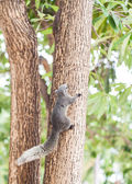 Squirrel on the tree in the park — Stock Photo