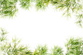Bamboo leaves frame isolated on white background. — Stock Photo