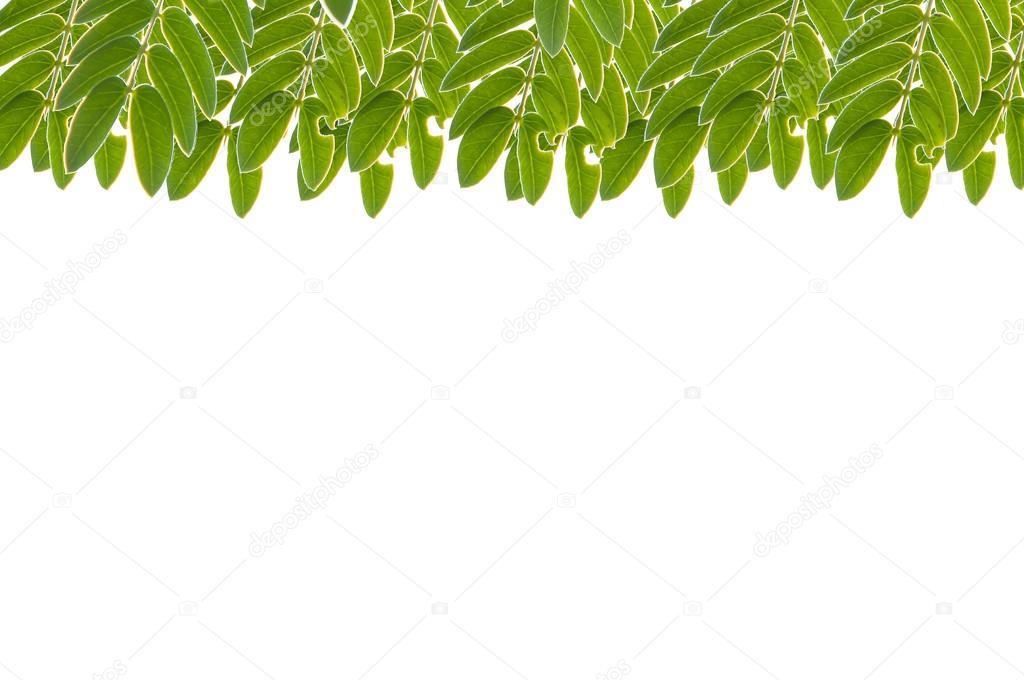 Hojas de color verde marco aislado sobre fondo blanco - Color verde hoja ...