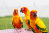 Group of Pineapple cocktail parrot — Stock Photo