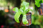 Orchid tree in black pot with hang. — Stock Photo