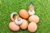 Eggs with chickens on green grass — Stockfoto