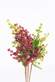 Red coffee beans on a branch of coffee tree — Stock Photo