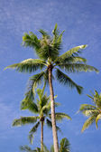 Nice palm trees in the blue sky — Foto de Stock