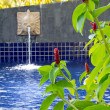 Постер, плакат: Red Malay Ginger at the pool