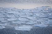 Blocks of ice on the coast of the frozen sea — Stock fotografie
