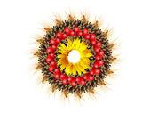 Corona de otoño — Foto de Stock