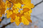 Autumnal — Stock Photo