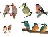 Kolekce zimní ptáků — Stock fotografie
