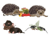 Insectivorous mammals — Stock Photo
