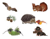 Small mammals — Stock Photo