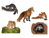 Forest mammals — Stock Photo