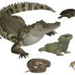 Stock Photo: Reptiles set
