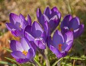 Spring awakening — Stock Photo