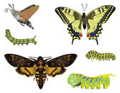Amazing insects — Stock Photo