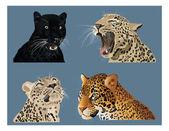 大きな猫 — ストック写真