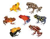 Increíbles ranas — Foto de Stock