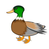 A duck on a white background — Stock Vector