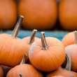Stock Photo: Pumpkins for Sale