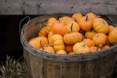 A basket of pumpkins — Stock Photo