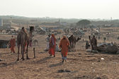 Bedouins and camels in Indian desert in Rajasthan — Stock Photo