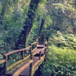 Walk way in the forest, Inthanon, Thailand — Stock Photo