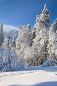 Winter snow covered forest — Stock Photo