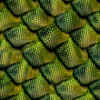 3d abstract Seamless snake skin, reptile scale — Foto Stock #26602865