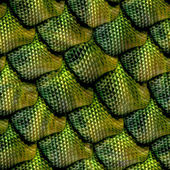 3d abstract Seamless snake skin, reptile scale — Stock Photo