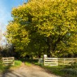 Autumn Driveway — Stock Photo