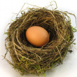 Big Nest Egg — Stock Photo