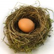 Stock Photo: Big Nest Egg