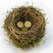 Stock Photo: Nest Egg