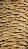 Palm Tree Texture — Stock Photo