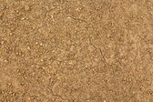 Dry Cracked Seeded Ground — Stock Photo