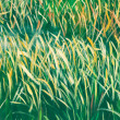 Painted Grass Texture — Stock Photo