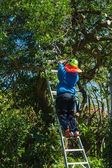 Tree Trimmer — Stock Photo
