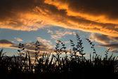 Flax Seed Stalls — Stock Photo