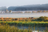 Mist Farmland — Stock Photo
