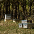 Bee Hives — Stock Photo #41833283