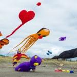 Collection Of Kites — Stock Photo