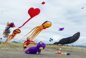Collection Of Kites — Foto Stock