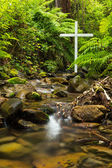 Fern Cross — Stock Photo