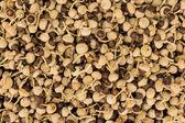 Acorn Shape Seeds — Stock Photo