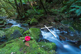 Cross Flowing Stream — Stock Photo