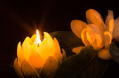 Magnolia By Candlelight — Stock Photo