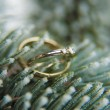 Wedding rings on a Christmas tree branch — Foto de Stock
